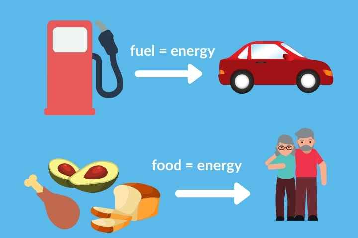 fuel is energy for cars, food is energy for people