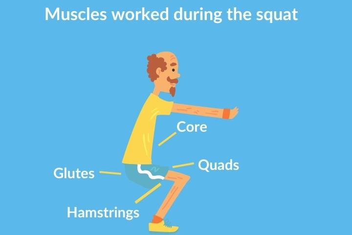squats for elderly - muscles worked during squat